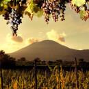 Sorrentino Vini